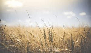 Framing for rural development in South Africa