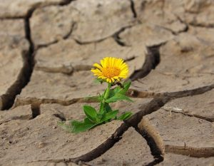 Broad-Based Livelihoods, Flower growing out of dry ground